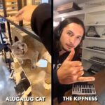 Alugalug Cat | The Kiffness (split image with the #LugaLugaCat on the left and The Kiffness on the right)