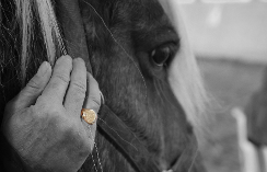 Hand and horse