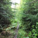 (image of a path through a forest)