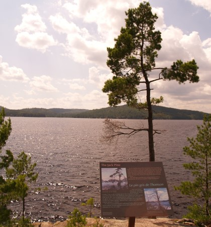 A photo of a pine tree, lake, and distant tree covered and landscape from Algonquin Park. A plaque in the foreground details how this is the spot where Tom Thompson took his inspiration for one of his paintings. There are white cumulous clouds blocking the sun and a light blue sky.
